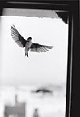 Hirondelles andalouses - Bernard Plossu