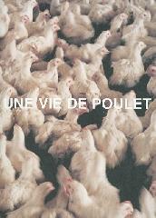 Une vie de poulet - Olivier Culmann