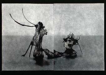 Petites machines à images - Laurent Millet
