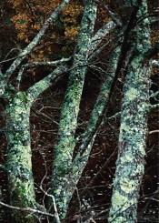 En surface - Laëtitia Donval