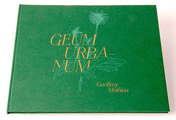 Geum Urbanum