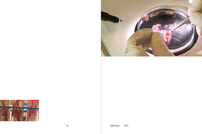 Souterrain / Subterranean